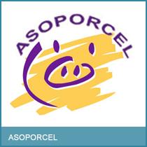 asoporcel